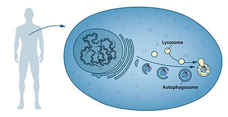Mechanisms for Autophagy